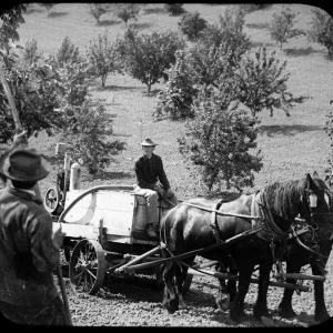 Spraying an orchard in the Hanford area in 1922. Photo courtesy of Our Hanford History.